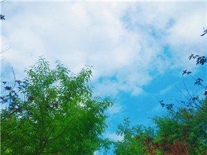红叶樱桃 绿了芭蕉 五月初夏的长春观惊艳了时光