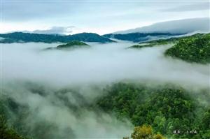 浙江唯一!中国最美森林落户开化!美到让人不想离开~