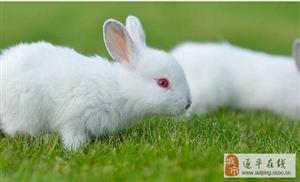 """俗语""""兔子不吃窝边草""""什么意思?其实下半句更经典,你知道吗?"""