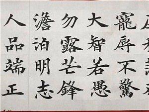 赵公臣书法家,一手欧楷品位文字意境之韵