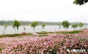 宿州这个地方太美了!大滨菊、金盏菊、月见草...花都开了