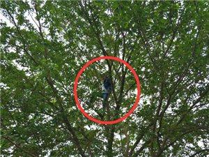 上天家!市民爬上大树在湿地公园摘果子