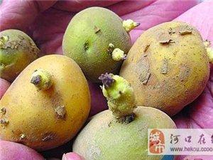 发芽土豆有毒、大蒜发芽后营养翻倍?告诉你哪些食物发芽后不能吃