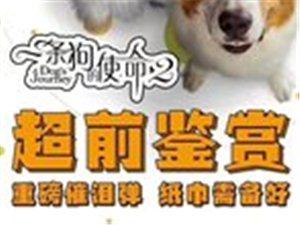 《一条狗的使命2》5月17日上映,记得带足纸巾!