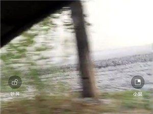 巴彦县西集镇长丰村共同王居屯 冰雹下的地都白了!