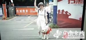 关注合肥首只导盲犬遭拒载: 保障导盲犬无障碍出行亟待法规细化