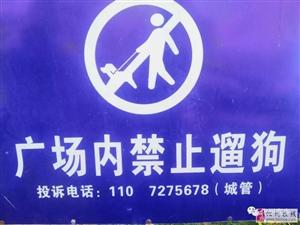 @化州人,你们在市府广场这种行为真的很丑!!!