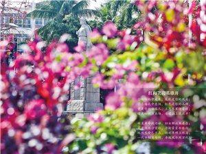 王裕超三角梅摄影作品――万泉河畔梅花红