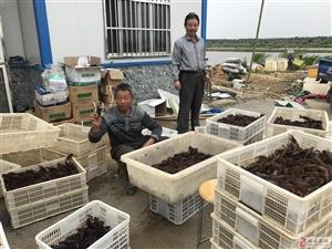 桐城全力推进稻渔综养双增工程,做亮富锌产业品牌
