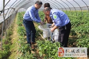 市农业农村局开展农产品质量监督抽检,确保端午节消费安全