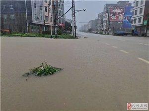化州大暴雨!多乡镇水浸!最新视频震憾了!(附图)