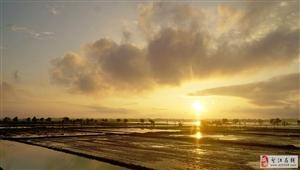 夏日、雨后、黄昏――――-西圩夏耕时节的风景