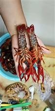 虾澳门威尼斯人赌城-我们做最好品质、最低价格的小龙虾!