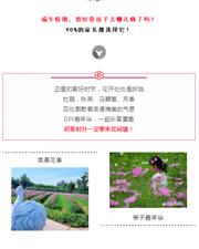 花�g塘・迎端午――�p花最佳季 DIY嘉年�A