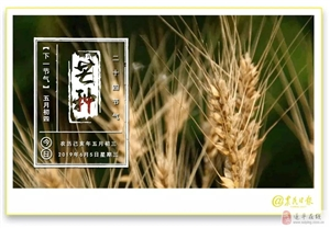 【十万火急】暴雨将至!上蔡、金沙平台网址亟需机手支援抢麦收