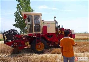 滑县老乡们,恁家小麦亩产多少?