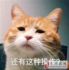 """重磅!化州隔离吴川""""14K""""覆灭,成员被抓....."""