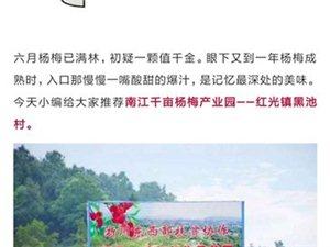 定了,2019南江红光杨梅节来了!