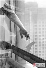"""从24楼成功""""越狱"""" 杭州一只向往自由的老母鸡火了"""