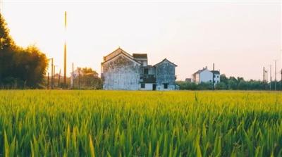 传来消息!麻城农村有地的要值钱了!可别荒了家里地!