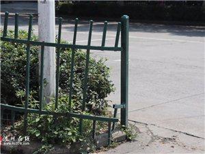 潢川不文明曝光台第10期!跃进路上你不顾性命钻护栏的样子真难看!