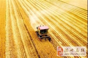 麦收结束了,粮食直补即将发放!这些问题一定搞清楚