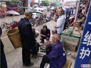 仁寿县禾加镇街道管理混乱