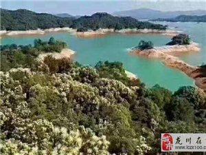 河源保利.堂悦林语首期只需8万起,3年分期100-142�O豪装三至四房