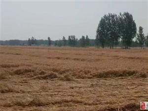 关于冰雹让农民颗粒无收的问题,金沙平台网址官方回复了...