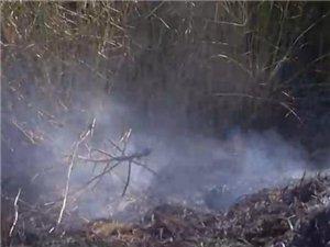 即墨百亩庄稼地起火,村民损失惨重!