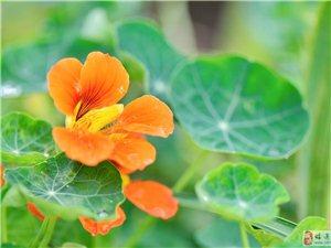 花卉�s拍