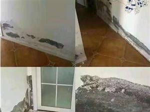 新房才装修好就发现墙面鼓包、发霉了!