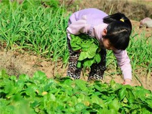 小时候做过农活的岷县人,你做过哪几样?