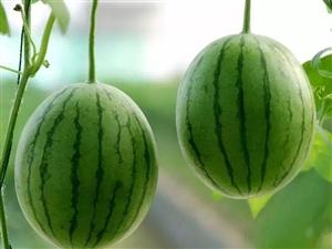夏日吃西瓜,药物不用抓!西瓜几大功效和禁忌,了解一下