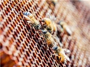 2019年中国蜂业博览会首次在长葛举办