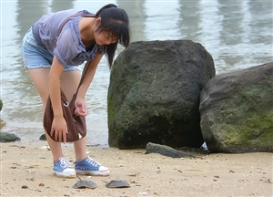 """女子海边意外捡获两只""""马蹄蟹"""",长相丑陋,甚是吓人"""