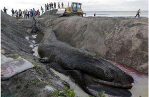 渔民沙滩对上突出异物,挖看细看后眼睛都大了