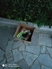 八七广场又有一小窝猫