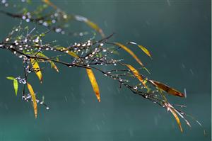 今日起河南开启阴雨模式,凉爽随周末而来