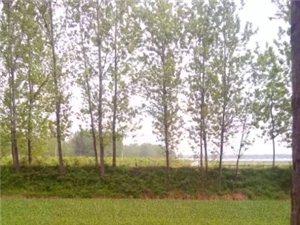 湛北乡之山前杨庄村