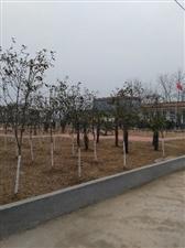 王洛镇之坡王村