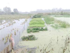 连日阴雨我地内涝严重边下雨边售稻谷