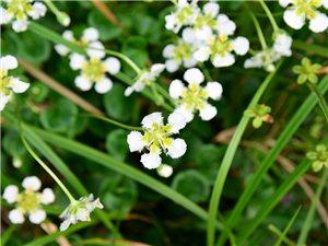 溪边漂亮的野花