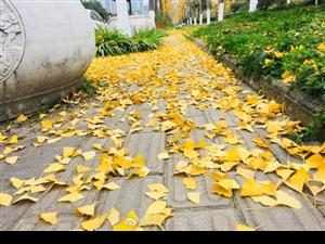 【汉中:满城尽带黄金甲】