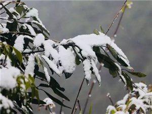 1月7日,泸州迎来2018首场降雪
