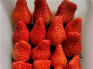 早安,吃草莓啦