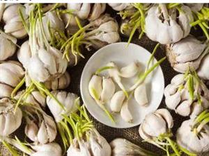 发芽的大蒜到底能不能吃呢?