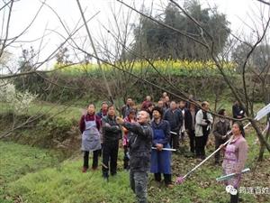 筠连镇舟尖峰村种植有一种山珍,不但味美还很有营养!