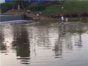湿地公园这些家长带着孩子这样耍,太危险了!家长们注意
