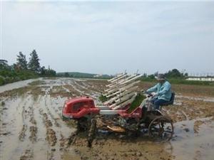 荆门农民主要的收入来源,多年来农业部门致力于让种田变得更轻松,而推广了一批高效的农业机械
